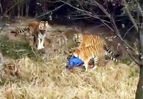 在宁波雅戈尔野生动物园老虎观看老虎时