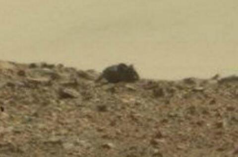 火星现巨大啮齿动物图