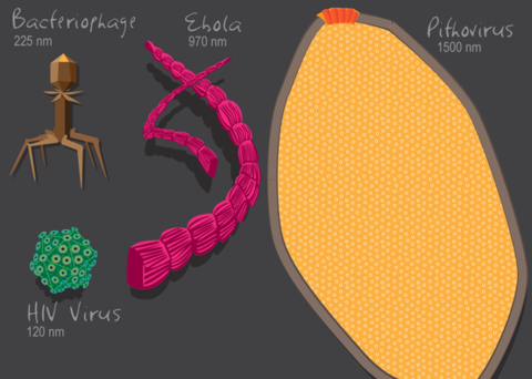 进化史 病毒是不是生物 新证据说是