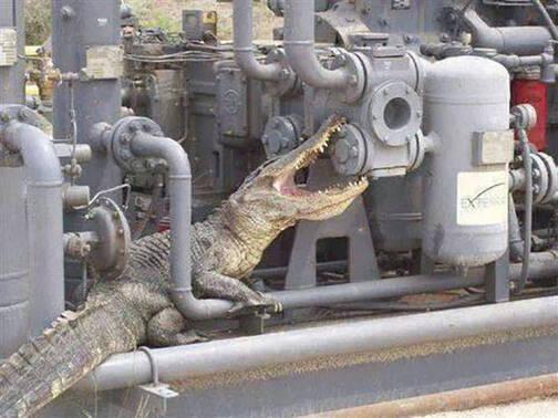 螺丝拧不动,鳄鱼帮你忙~