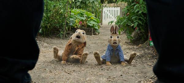 《比得兔》成为兔界流量担当 影版赋予萌兔新生命