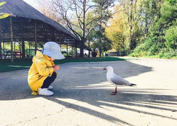 张梓琳女儿与海鸥面面相觑 场面搞笑萌翻网友