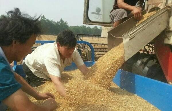 """""""大衣哥""""回家收麦子,这个小动作被赞超暖心!"""