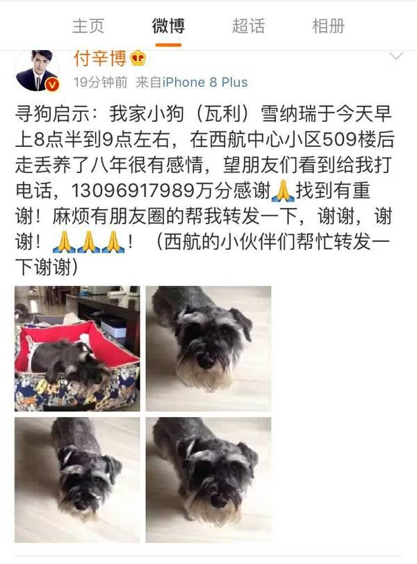 付辛博为寻爱犬自曝家庭地址和电话 网友:有勇气!