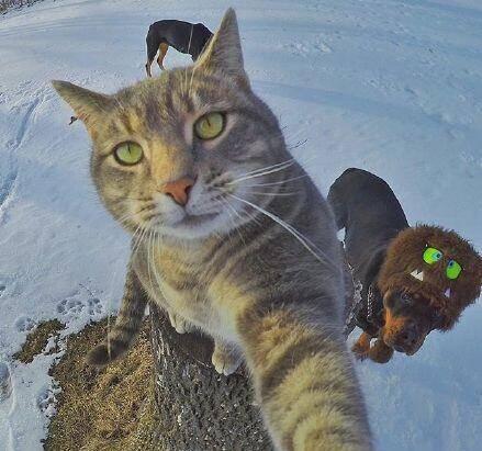 壁纸 动物 猫 猫咪 小猫 桌面 439_411