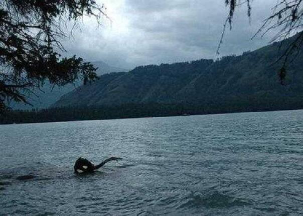 喀纳斯湖水怪终于被证实