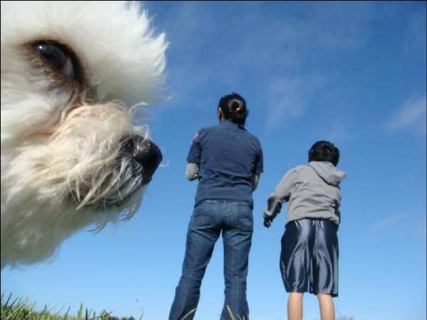 进击的巨犬