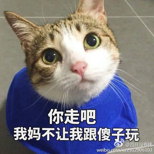 壁纸 动物 猫 猫咪 小猫 桌面 604_604