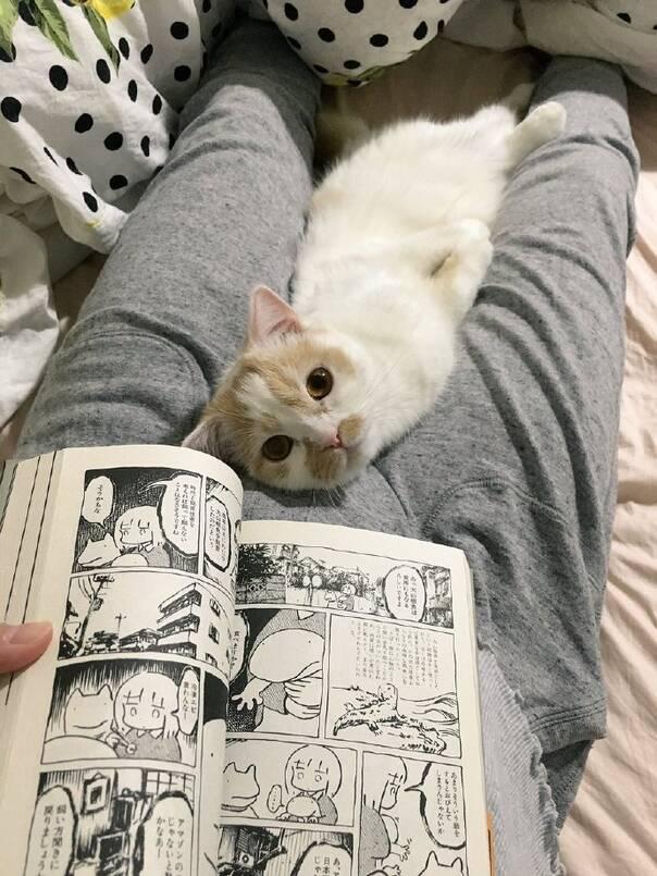 被这样的小眼神盯着哪还有心思看漫画