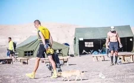 这只流浪狗在参加一场马拉松后 赢得了一位新主人