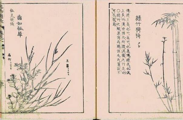《诗经》竟是部百科全书:这些鸟兽草木你知道多少?