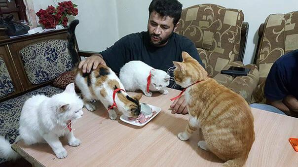 当人们逃离叙利亚时 他选择留下照顾难民和流浪猫