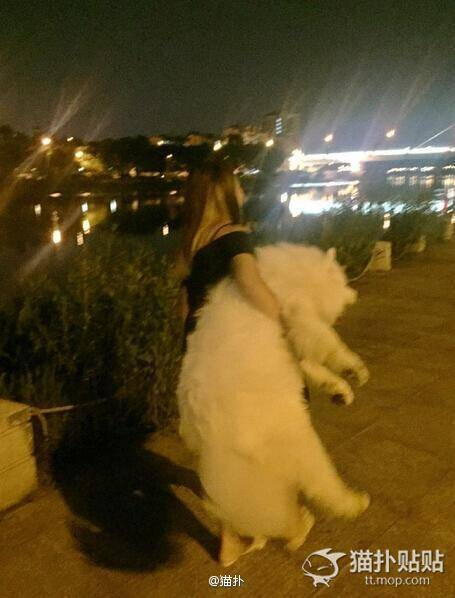 晚fun来了:看狗打架 明白了啥叫一屁股怼你脸上图片
