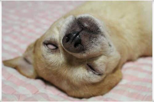 14张让人崩溃又搞笑的宠物睡觉照片