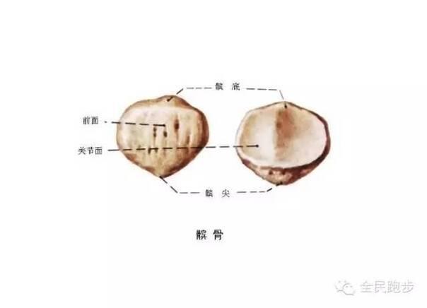 髌骨爪单颗螺丝结构图