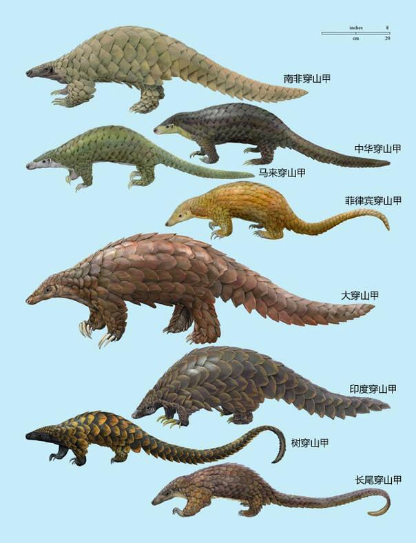 动物 恐龙 604_788 竖版 竖屏