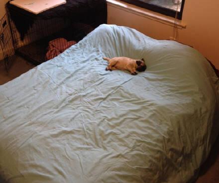 萌宠150617:听说你们喜欢睡大床 还不让铲屎官分一杯羹