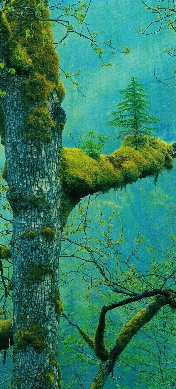 树上有树!