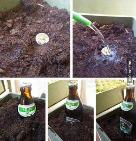 种下一个瓶盖,收获一瓶啤酒