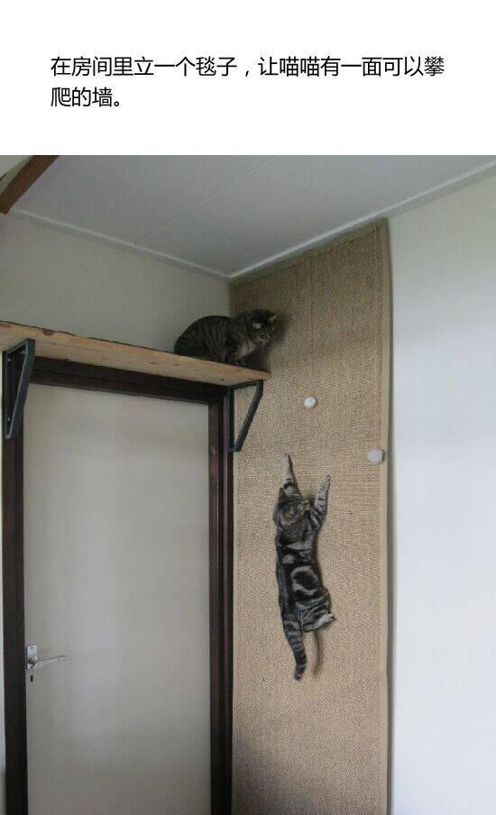 分享一个养猫手册 帮你迅速成为优秀的铲屎官