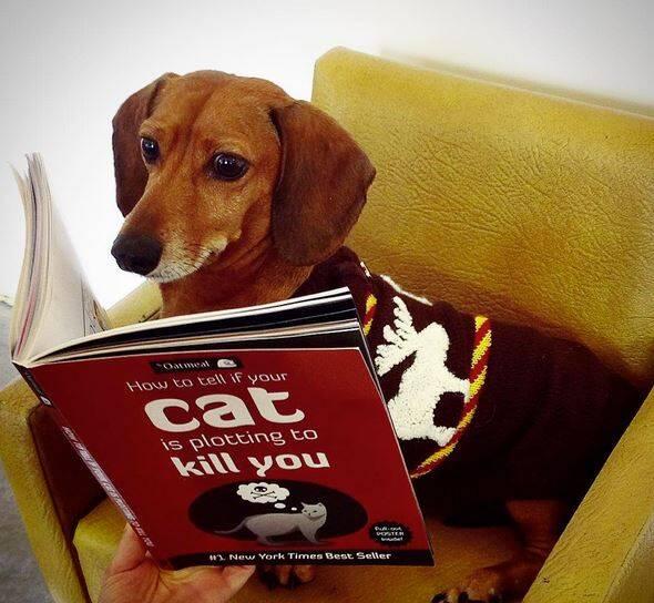"""""""如何判断猫是不是正准备干掉你""""汪星战队入门教程"""