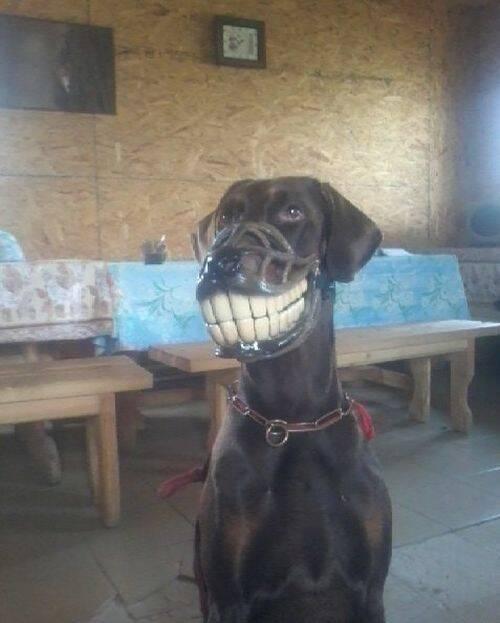 狗狗戴上嘴笼后……成了马了吗?