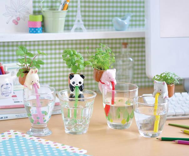 自己会喝水的懂事小绿植 快到我的杯里来