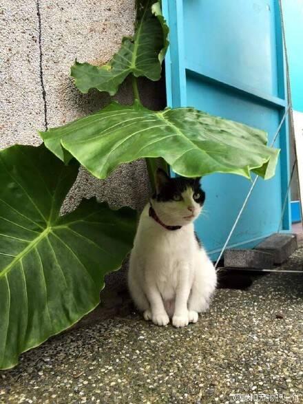 叶子下的喵星人 他一定是在等龙猫巴士