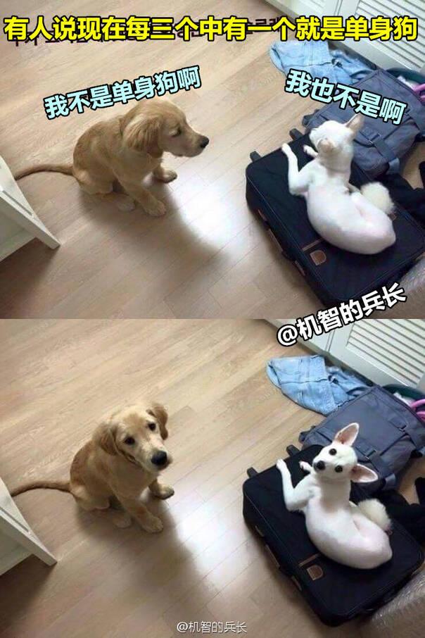 囧图160322:据说每三个人中就有一个是单身狗 41图