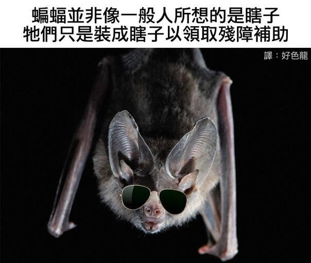 普通蝙蝠吊扇接线图