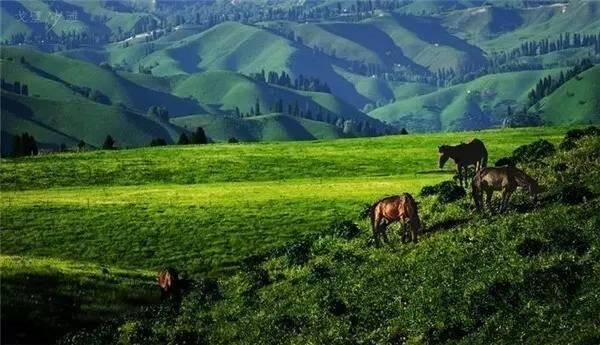 库尔德宁风景区位于伊犁巩留县东南部的山区内,是一处兼具峡谷,森林
