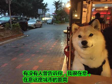 虐心150602:狗生如歌:喜欢的狗不出现 出现的狗不喜欢
