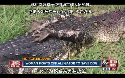 动物妆容图片鳄鱼