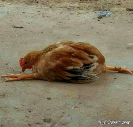 做鸡就算了,居然还劈腿!