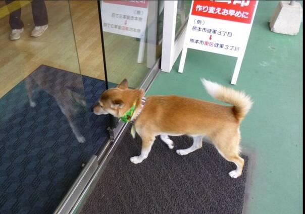 软是怎么回事_你看看这狗狗脖子右边突然有个软软的包,是怎么回事.求招