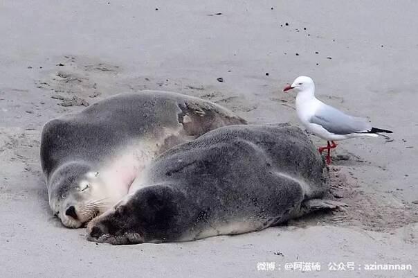壁纸 动物 海洋动物 桌面 604_401