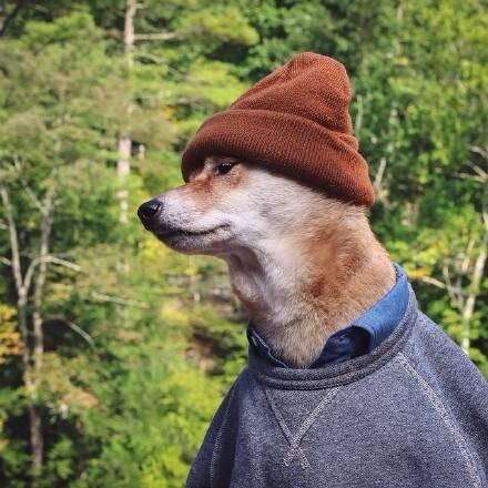 萌宠150414:据说很多男生看了觉得自己还没一只狗帅