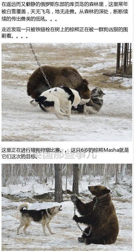 异次元观光150415:战斗种族训练猎狗的方式 有点猛