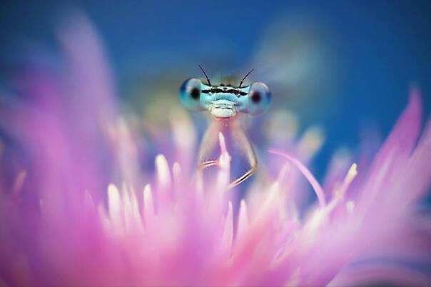 萌宠150508:我家后院的蜻蜓不可能这么可爱