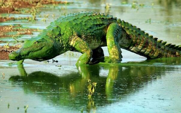 至尊神图爱虾的鱼-小鳄鱼要洗澡   学园handsome!   一岛国少年抓住了一只螃蟹这个螃...