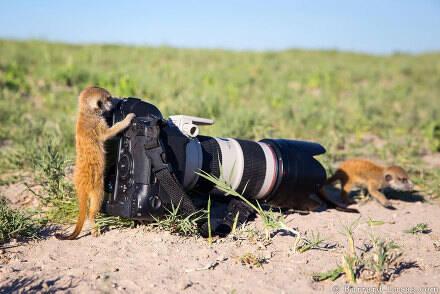 萌图150729:和小动物一起去摄影