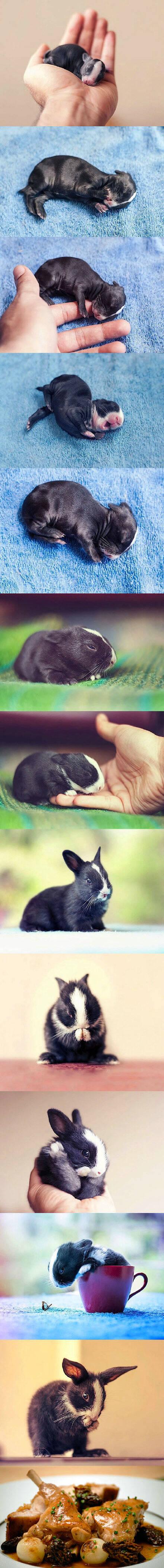 萌宠150821:萌兔子的成长历程 最后也是万万没想到