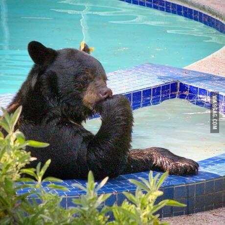 不要打扰我,我在思考熊