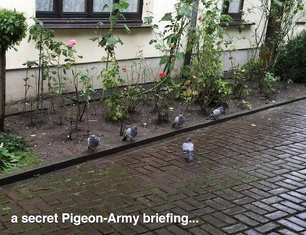 灰鸽特种兵,检阅中