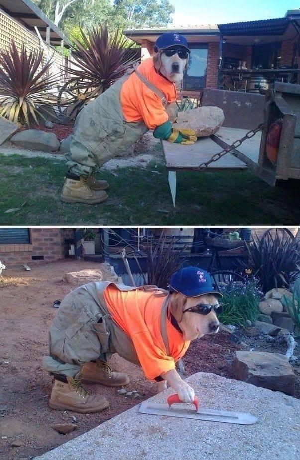 新雇了一个搬砖的,管吃管住就行