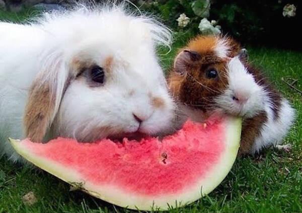 挣扎于人类食物的小动物