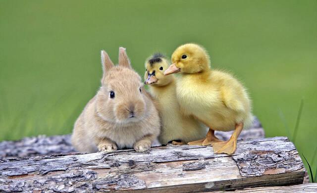 实拍动物界跨物种友谊 猫鼠亲密相拥