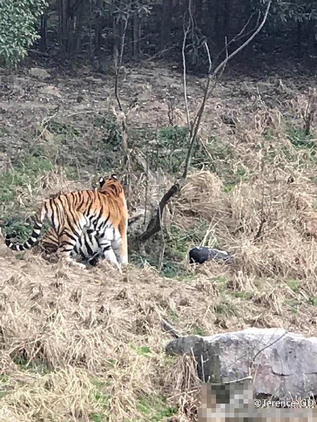 4/6宁波雅戈尔动物园前身是宁波东钱湖野生动物园,位于东钱湖旅游