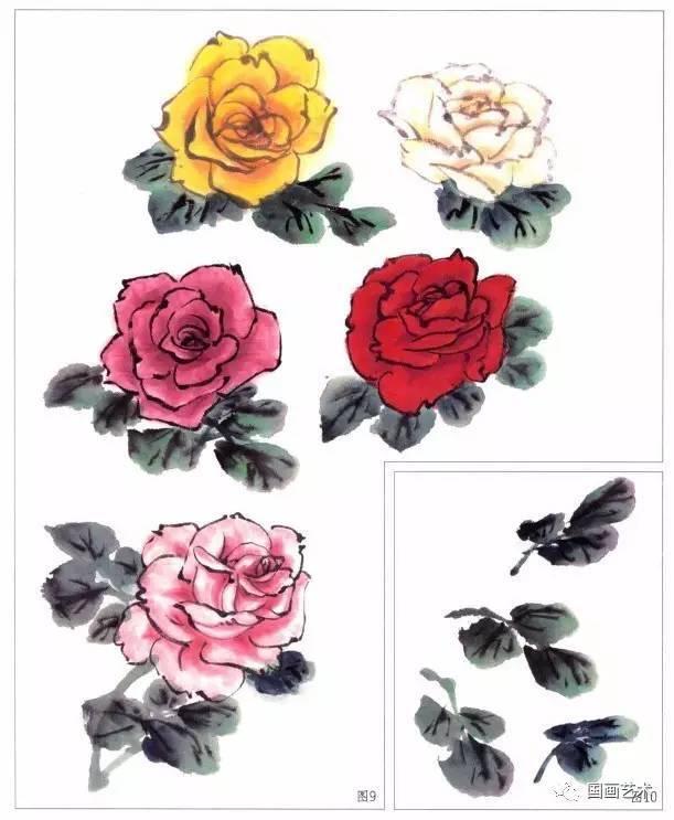 图文教程:月季花的画法详解