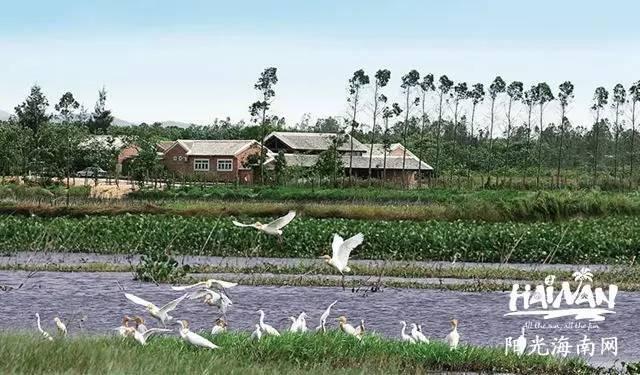 地址:昌江黎族自治县海尾镇石港塘字体湿地内如何设计手抄报范围设计图片